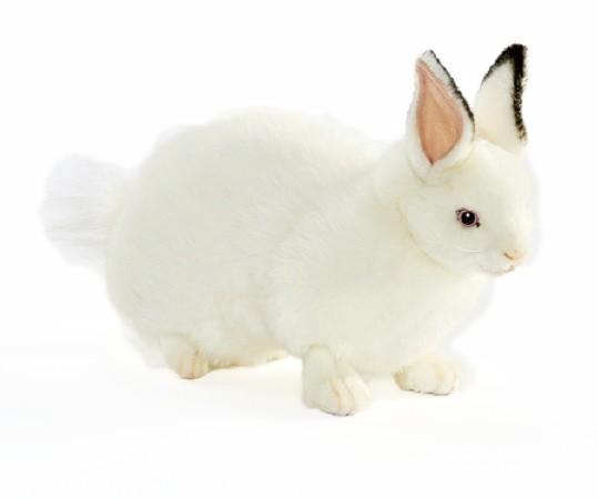 Hansa 6305 Hase weiss liegend 34 cm